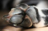 Que sont et à quoi servent les coussinets des chiens ?