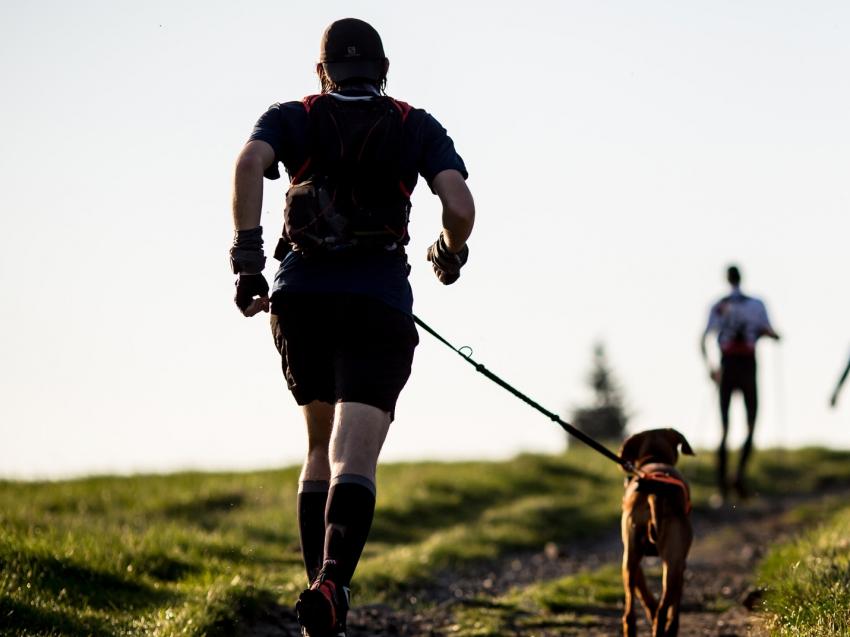 7 raisons de courir avec votre chien. Black Bedroom Furniture Sets. Home Design Ideas