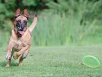 Adapter l'activité physique à son chien
