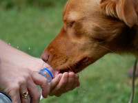 Les règles à respecter avant de faire du sport avec votre chien