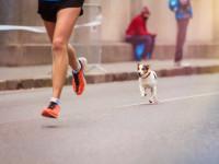 La préparation mentale et physique du chien d'exposition