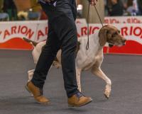L'éducation d'un chien d'exposition