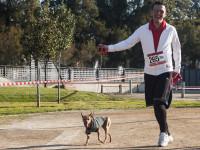 Le canicross, un sport canin accessible à tous les chiens