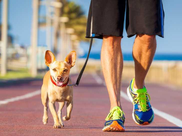 comment apprendre à son chien le canicross