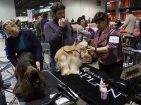 Préparer son chien avant une exposition canine