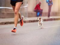 La préparation physique et mentale du chien