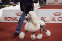 Le déroulement des épreuves lors d'un concours canin
