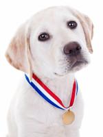 S'inscrire à une exposition canine