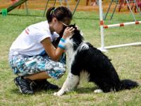 Comment pratiquer l'agility avec son chien ?