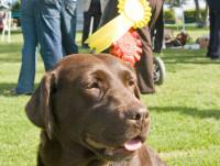 Le championnat de France d'obéissance canine