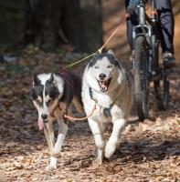 Le cani VTT