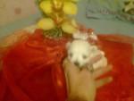 Chien izzia - Bichon maltais Femelle (3 mois)