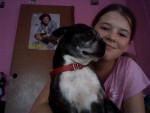 Chien Scooby&Me - Terrier de Boston Mâle (7 ans)