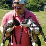 Chien Wilson and Rio - Terrier de Boston Femelle (1 an)