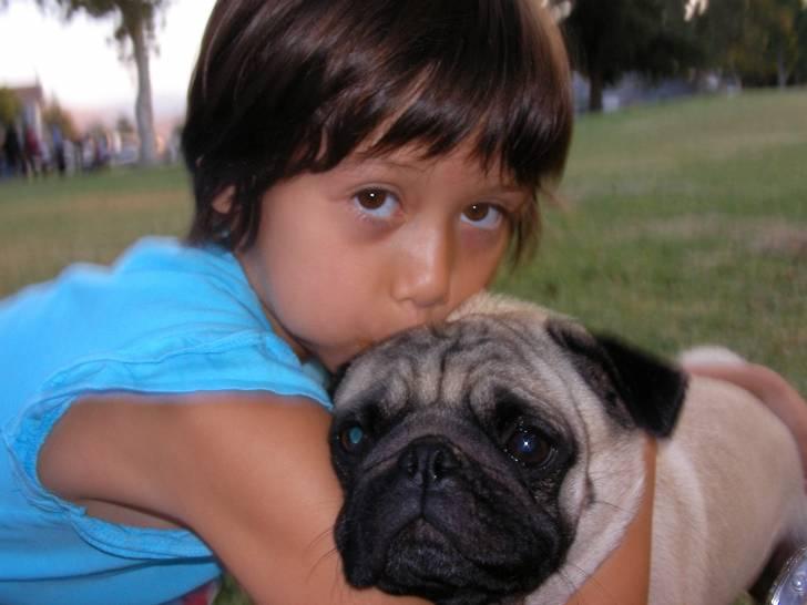 Chien Zig - Carlin Mâle (6 ans)