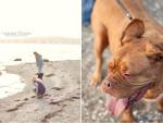 Chien ellie - Dogue de Bordeaux Femelle (8 ans)