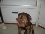 Chien charlotte dogue de bordeaux - Dogue de Bordeaux  (0 mois)
