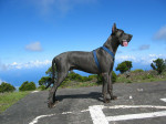 Chien Ulric 2 - Dogue Allemand  (0 mois)
