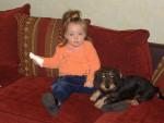 Chien bouba - Teckel Femelle (3 ans)
