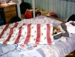 Chien c\'est ma couverture  - Basset Hound Femelle (0 mois)