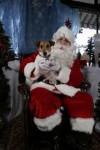 Chien natale da cane - Terrier de chasse allemand Femelle (0 mois)