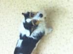 Chien Bessie Nessie Marker - Jack Russell Femelle (7 ans)