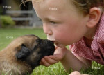 Chien tinon - Yorkshire Femelle (8 mois)