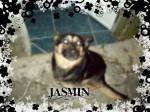 Chien JASMIN - Chien d\'eau frison Femelle (5 mois)