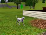 Chien Lassie - Dalmatien Femelle (0 mois)