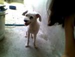 Chien Doggie - Caniche Mâle (13 ans)