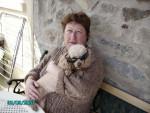Chien caniche - Caniche  (0 mois)