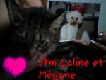 Chien Caline & mégane (dcd) - Caniche Femelle (2 ans)