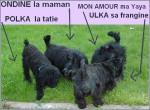 Chien Ondine Ulka Mi Amor et Polka - Terrier Ecossais Femelle (Autre)