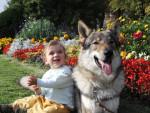 Chien Arès,chien-loup tchécoslovaque - Chien Loup Tchèque  (0 mois)