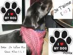 Chien Bobbie - Labrador Femelle (3 ans)