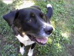 Chien Chief - Labrador Mâle (12 ans)