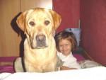 Chien ATHOS LABRADOR 9 mois - Labrador  (9 mois)