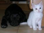 Chien Luna - Labrador Femelle (1 an)