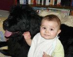 Chien Babushka - Terre Neuve Femelle (5 ans)
