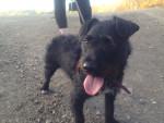 Chien Paws - Patterdale Terrier Mâle (4 ans)