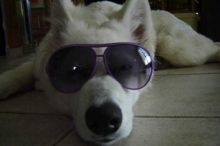 Photo fidji berger blanc suisse femelle 5 mois - Race chien volt ...