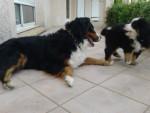 Chien BB et maman - Bouvier Bernois Femelle (4 ans)