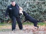 Chien suko de breogan - Rottweiler Mâle (8 ans)