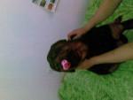 Chien Macx - Rottweiler Femelle (3 ans)