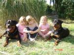 Chien rottweiler Arès de l\'élite des empereurs - Rottweiler  (0 mois)