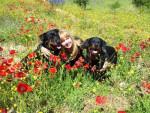 Chien Elena avec Margo à gauche et Karmen à droite - Rottweiler  (0 mois)