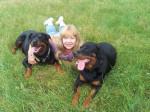 Chien Elena, Margo et Karmen - Rottweiler  (0 mois)