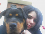 Chien Cora - Rottweiler Femelle (2 mois)