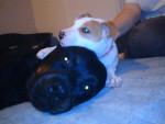 Chien Sam et Yuna - Rottweiler Femelle (8 ans)