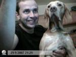 Chien braque de weimar - Braque de Weimar  (0 mois)